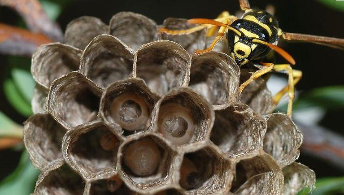 Wasp nest removal London Stansted Airport Essex